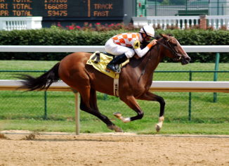 Graded Stakes Culminate to Final Countdown Before Big Race Day