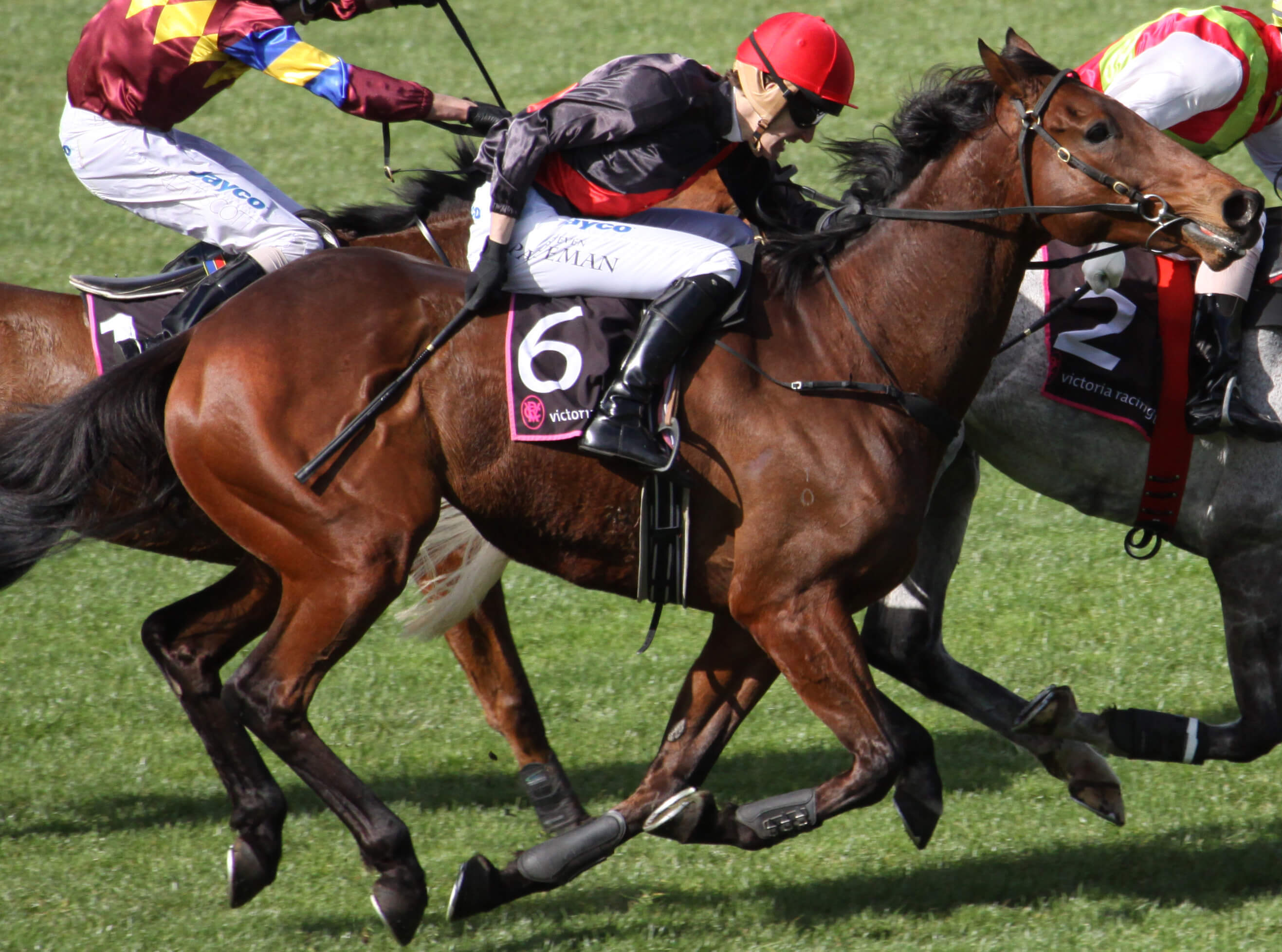 Tips on Winning Big Money in Thoroughbred Races